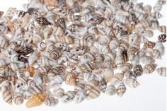 Κοχύλια για διακόσμηση σχήμα σαλιγκαροειδές - πακέτο 200 γρ. (περίπου 615 τμχ)