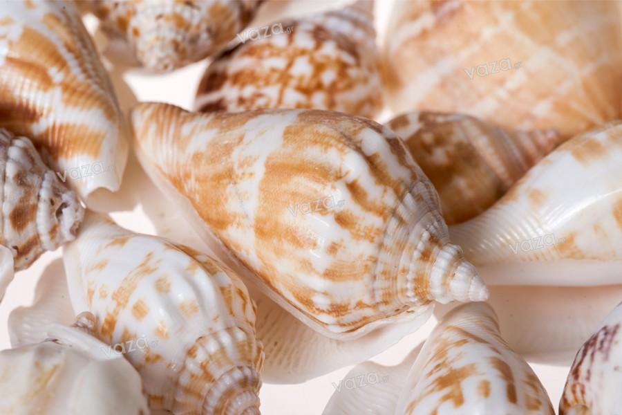 Κοχύλια σε φυσικό χρώμα σχήμα σαλιγκαροειδές - πακέτο 200 γρ. (περίπου 24 τμχ)