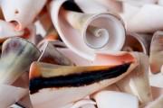 Κοχύλια διακόσμησης - συσκευασία 25 τεμαχίων