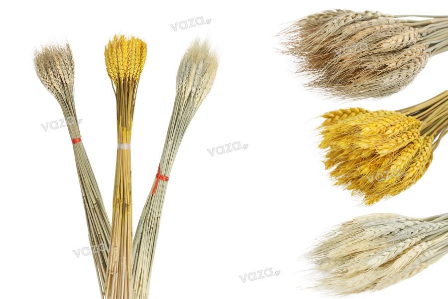 Αποξηραμένα λουλούδια - στάχυα για στολισμό και διακόσμηση - 1 τμχ (μπουκέτο με περίπου 50 κλαδιά)
