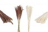 Αποξηραμένα λουλούδια για διακόσμηση - 1 τμχ (μπουκέτο με περίπου 14 κλαδιά)