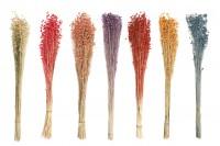 Fleurs décoratives séchées - bouquet